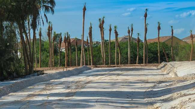 Feb 22, 2016 - New trees planted at Publix at Southshore Village, Ruskin, FL/photonews247.com