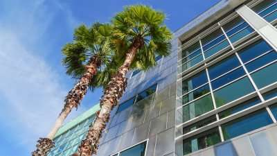 Palm trees climb to the top of Tampa Port Authority building/photonews247.com
