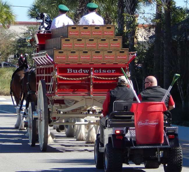 Budweiser Clydesdales Horses riding away at Grand Opening Day Walmart Neighborhood Market, Riverview, FL
