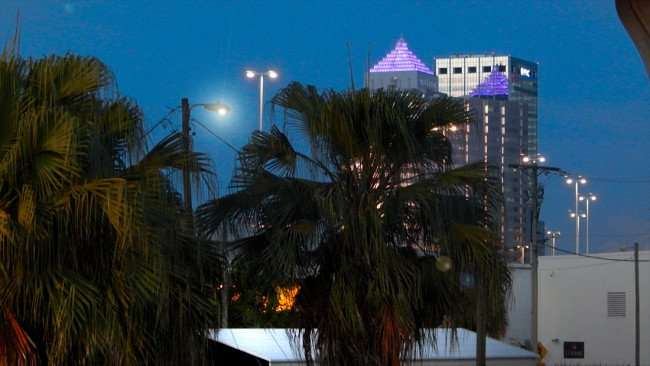 JUL 19, 2015 - Palm trees with Sun Trust and One Tampa City Center PNC skyscrapers in backgound at dawn in downtown Tampa, FL/photonews247.com
