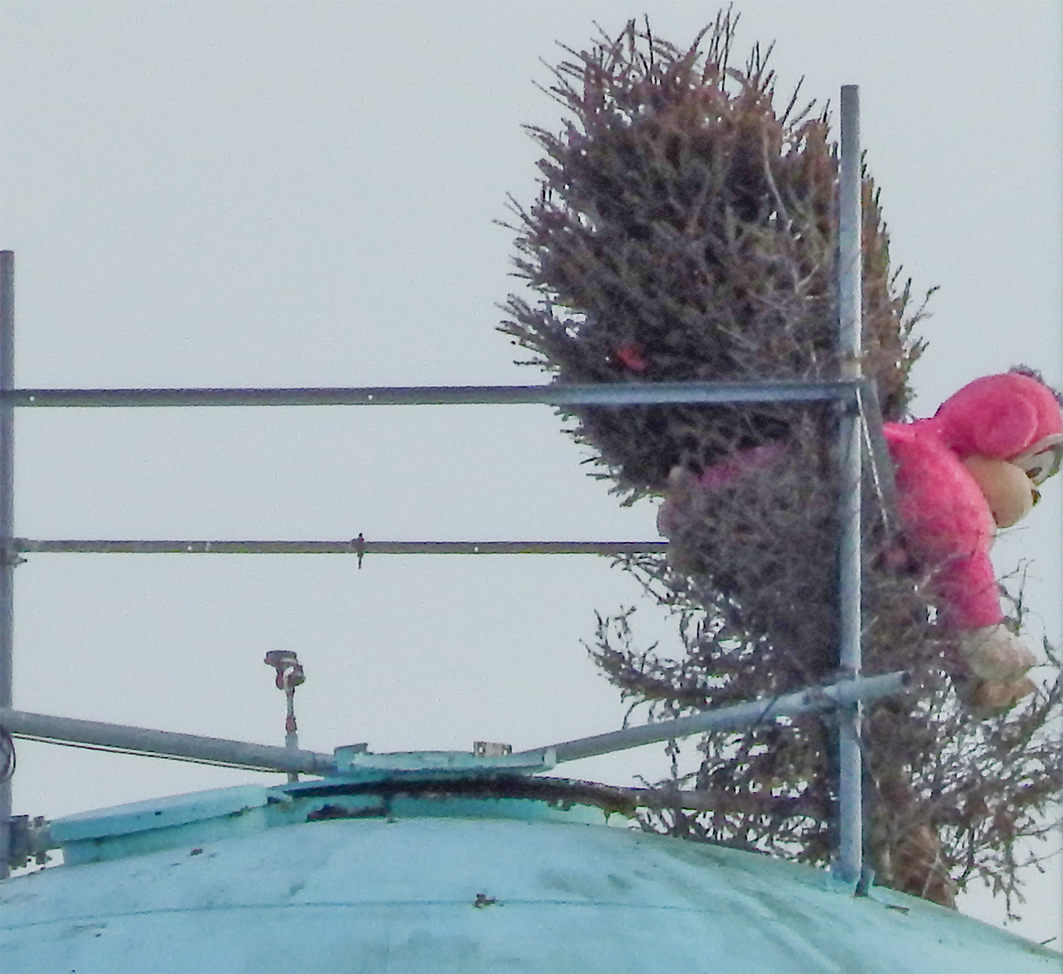 Pink monkey attached to bush on top of Apollo Beach Water Tower across from Sea Food Dive and Winn Dixi on US 41 in Apollo Beach