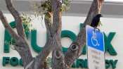 MAY 11, 2015: black bird in front of Publix sign in Kings Crossing, Sun City Center FL / Photo News 247