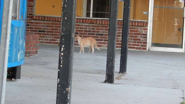 MAY 12, 2015: A cat looking at birds in Twin Oaks Plaza on US 41, Gibsonton South Shore, FL / Photo News 247