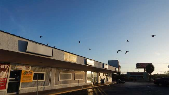 MAY 13, 2015 - Seagulls early morning visit at Apollo Beach Shopping Center on US 41