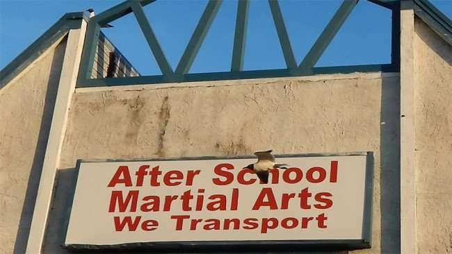 MAY 13, 2015 - Seagull flies in front of Karate MMA sign above Apollo Beach Karate School on US-41