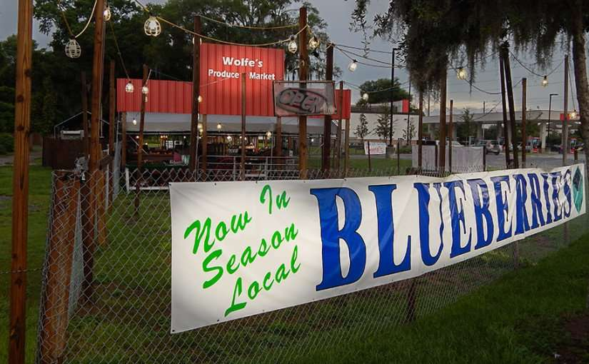June 11, 2015 - Locally grown blueberries now in season at Wolfe's Produce Market, Riverview, FL