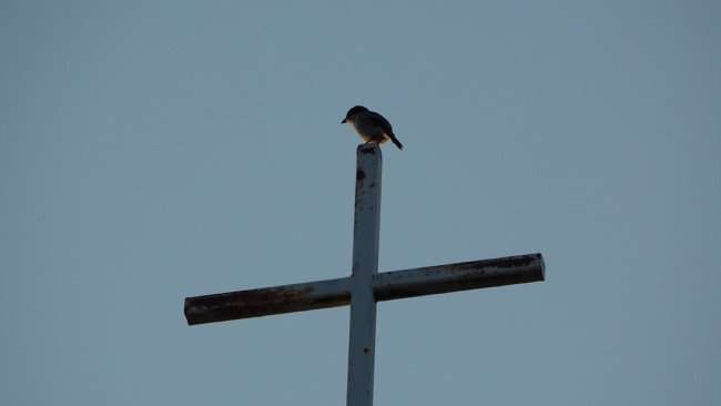 June 20, 2015 - Bird on top of Cross at Northside Baptist Church on US Hwy 41 (Tamiami Trail) in Ruskin SouthShore, FL