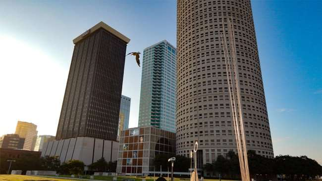 JULY 26, 2015 - Bird flying at Nations Bank Park Plaza above Photographic Art Museum in Tampa Florida skyline/photonews247.com