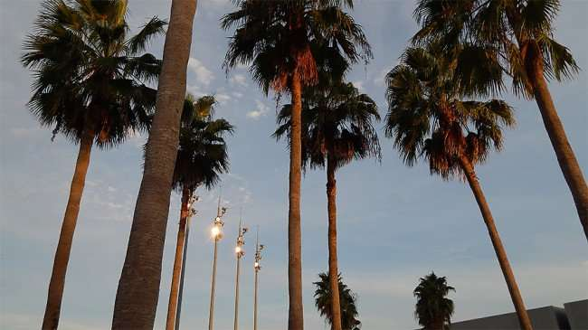 AUG 23, 2015 - Curtis Hixon Park with Palm trees and bright lighting, Tampa, FL/photonews247.com