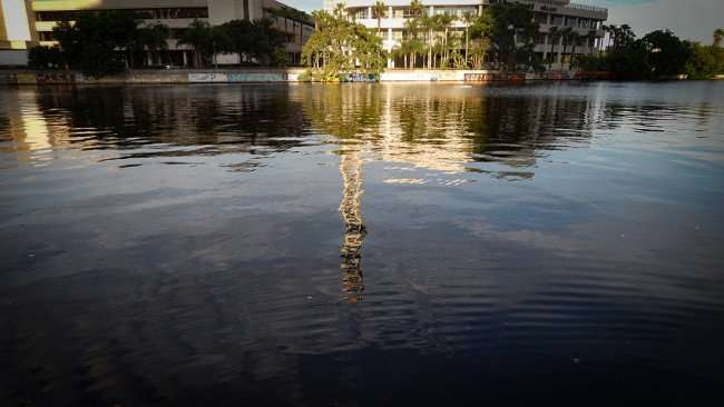 AUG 23, 2015 - Hillsborough River from MacDill Park at the Tampa Riverwalk, Downtown Tampa, FL/photonews247.com