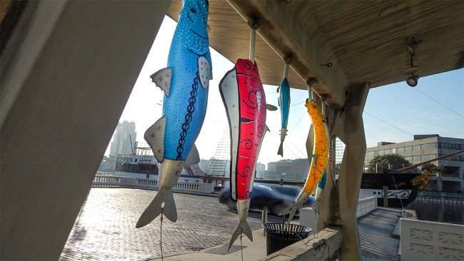 AUG 9, 2015 - Street art with five fish hanging from hooks on Bayshore Blvd, Downtown Tampa, FL/photonews247.com