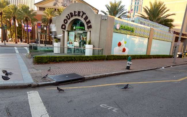 SEPT 14, 2015 - Pigeons gather at DoubleTree Pinkberry in New Orleans, LA/photonews247.com