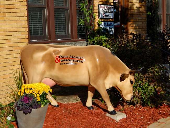 OCT 10, 2015 - Cow statue in front of Dave Mosher Associates Insurance building in New Glarus, WI/photonews247.com