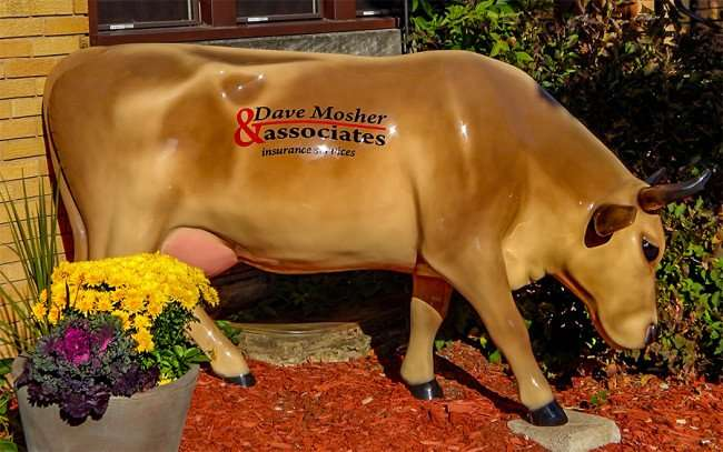 OCT 10, 2015 - Dave Mosher Associates Insurance uses milk cow for marketing in front of building in New Glarus, WI/photonews247.com