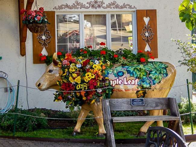 OCT 10, 2015 - Life size cow at Maple Cheese and Chocolate House, New Glarus, WI/photonews247.com