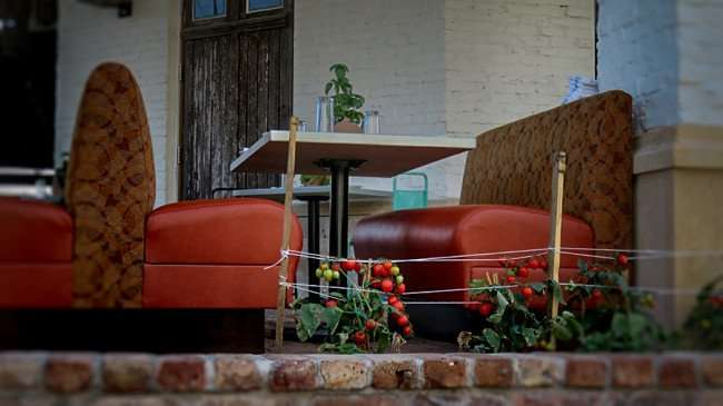 Dec 27, 2015 - boca Brandon with cushioned booth seating in outside dining area with tomato plants near by, Riverview, FL/photonews247.com