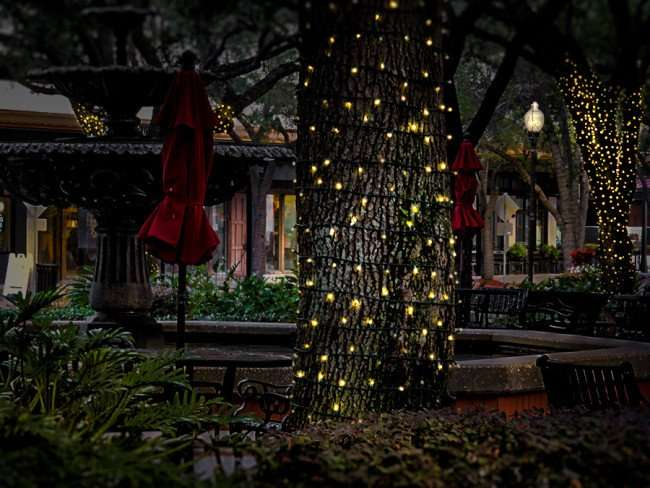 Jan 23, 2016 - Hyde Park Village shopping center with Christmas lights on trees, Tampa, FL/photonews247.com