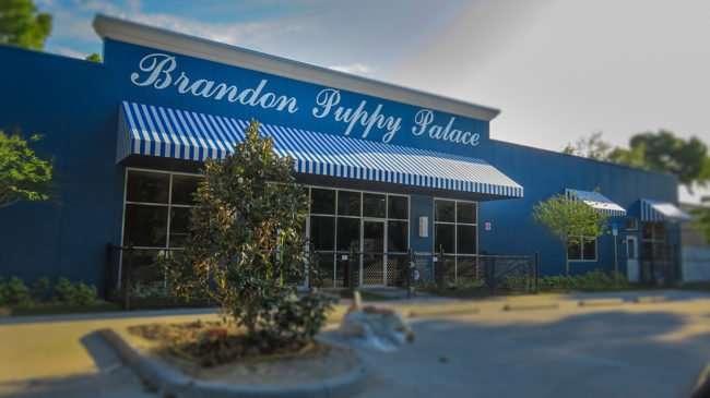 May 1, 2016 - Brandon Puppy Palace, Lumsden Rd, Brandon, FL/photonews247.com