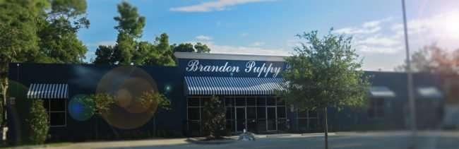 May 1, 2016 - Brandon Puppy Palace under construction on Lumsden Rd, Brandon, FL/photonews247.com