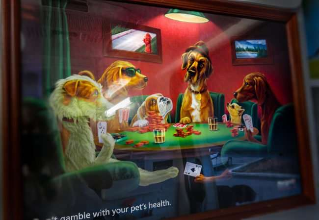 May 4, 2016 - Mobile Vet Clinic, Sun City Center with animated picture of dogs playing cards/photonews247.com