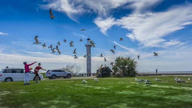 03.04.2017 - Feeding seagulls in flight at The BroadWater Beach lighthouse in Biloxi MS/photonews247.com