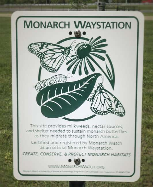 May 2, 2017 - Monarch Waystation Whitehaven Visitors Center, Paducah, KY/photonews247.com