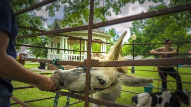 June 17, 2017 - Marc feeding Jenny the donkey potato chips at Farm Frenzy 2017, Metropolis, IL/photonews247.com