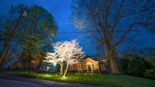 April 24, 2018 - Dogwood Tree lighted with floodlights during Paducah's Lighted Dogwood Trail/photonews247.com