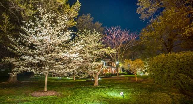 April 19, 2018 - Lighted DogWood Trail in Paducah - a dogwood tree with floodlights on front yard/photonews247.com