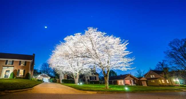 April 19, 2018 - Lighted DogWood Trees on Dogwood Trail in Paducah, KY/photonews247.com