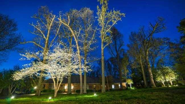 April 26, 2018 - Lighted Dogwood Trail Paducah: house with dogwood tree decorated with floodlights/photonews247.com