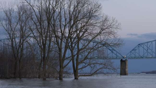 03.07.2018 - Trees under water at Brookport Irvin Cobb Bridge, Brookport IL/photonews247.com