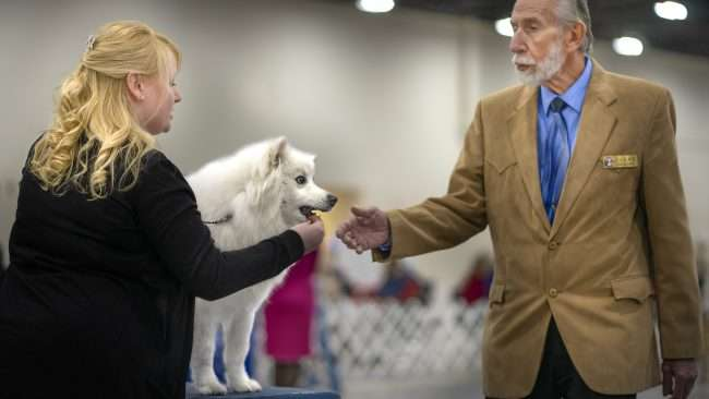 April 8, 2018 - Competition and Judging at Kennel Club Quilt Classic Dog Show Paducah, KY/photonews247.com