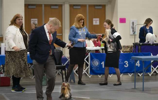 April 8, 2018 - Competition during Kennel Club Quilt Classic Dog Show at the Paducah Convention Center/photonews247.com