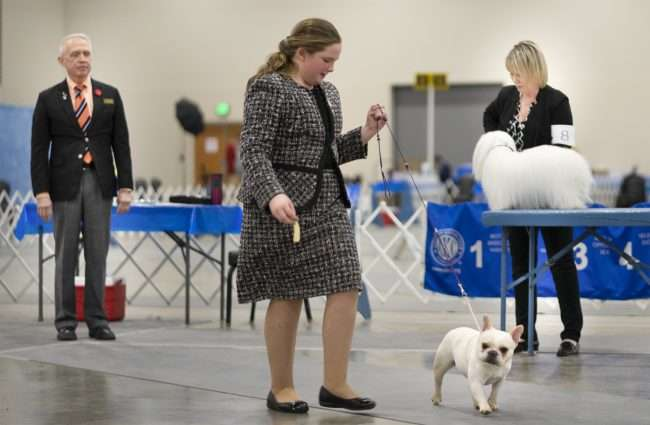 April 8, 2018 - Competition during the Kennel Club Quilt Classic Dog Show at the Convention Center Paducah/photonews247.com