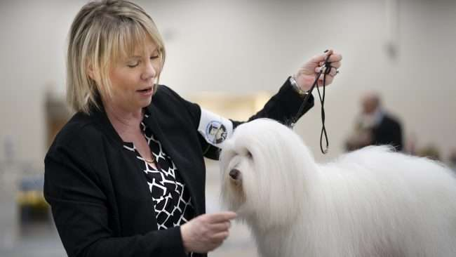 April 8, 2018 - Tracy McSherry-McKown with her pet Sophia (Coton de Tulear) winner of Owner Handled Non-Sporting Group, Quilt Classic Dog Show Paducah, KY/photonews247.com