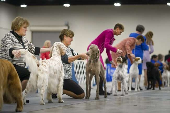 April 8, 2018 - Dog Competition during Kennel Club Quilt Classic Dog Show inside the Paducah Convention Center/photonews247.com