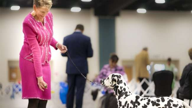 April 8, 2018 - Dog owner and dog attends Kennel Club Quilt Classic Dog Show Paducah at the Convention Center, KY/photonews247.com
