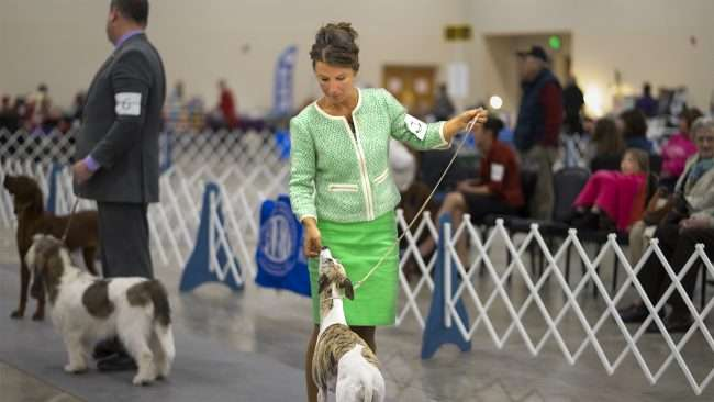 April 8, 2018 - Hound Competition during the Kennel Club Quilt Classic Dog Show Paducah, KY/photonews247.com