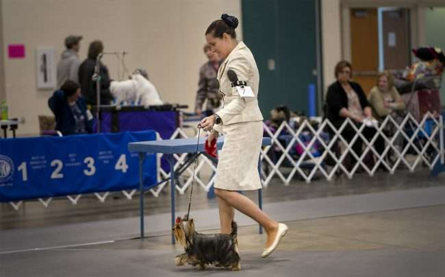April 8, 2018 - Owner and dog competing in Kennel Club Quilt Classic Dog Show Paducah, KY/photonews247.com