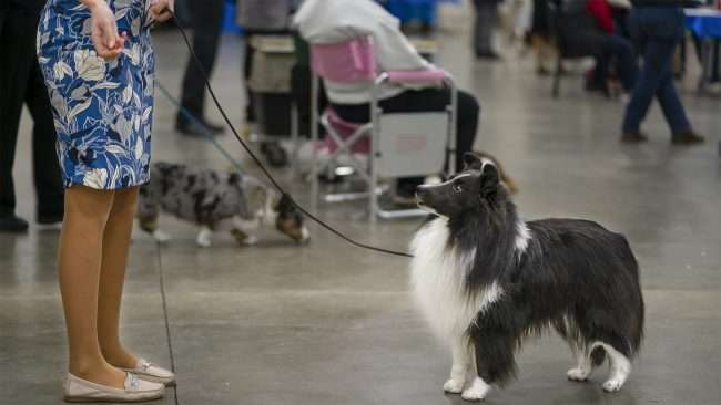 April 8, 2018 - Owner communicating with pet after win at Paducah Dog Show inside the Paducah Convention Center/photonews247.com