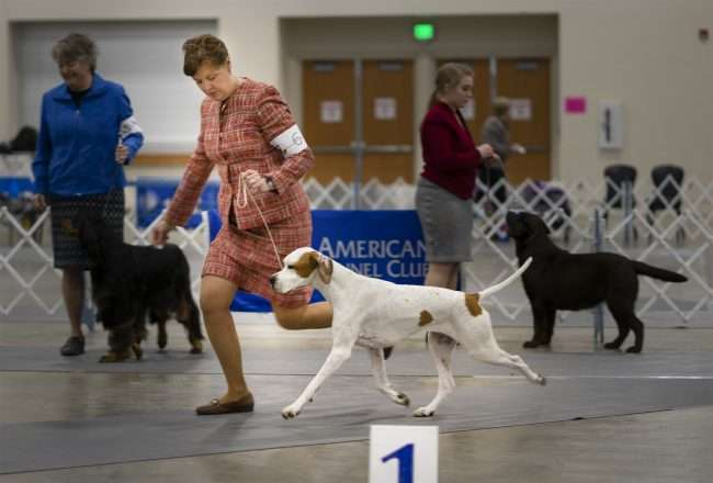 April 8, 2018 - Owner running with dog during Kennel Club Quilt Classic Dog Show Paducah Convention Center/photonews247.com