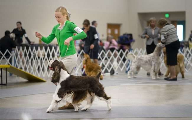 April 8, 2018 - Woman and dog competing in Kennel Club Quilt Classic Dog Show Paducah, KY/photonews247.com