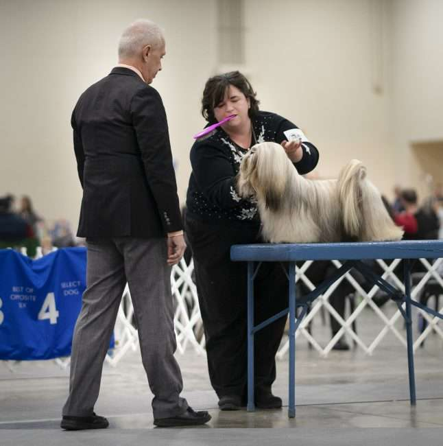 April 8, 2018 - Woman stands next to her dog getting looked over by Judge Quilt Classic Dog Show Paducah/photonews247.com