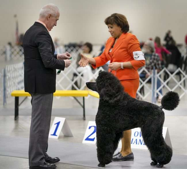 April 8, 2018 - Woman with poodle receiving ribbon during the Quilt City Classic Dog Show a the Paducah Convention Center/photonews247.com