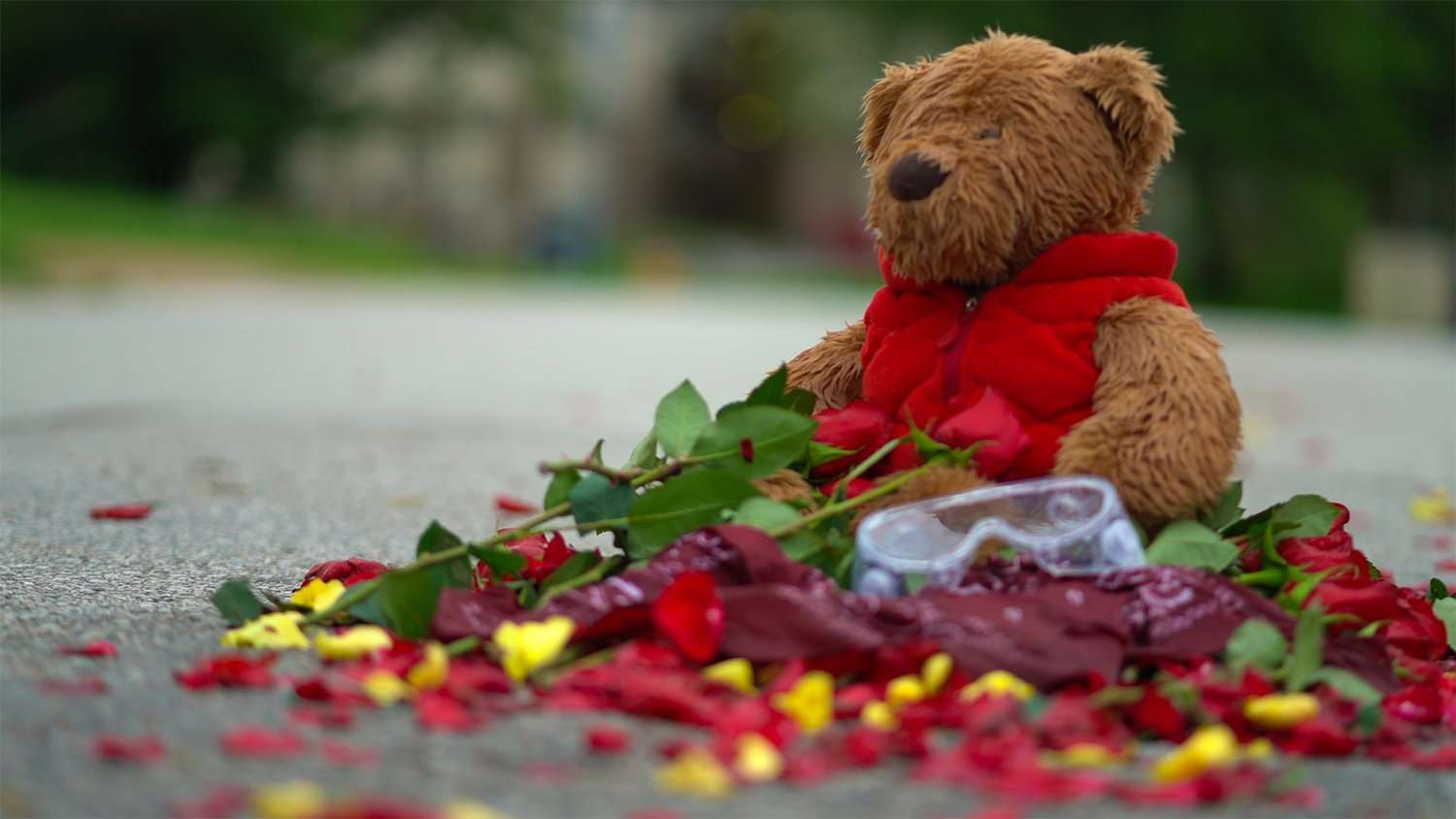 Teddy Bear at Michael Brown's Street Memorial on Canfield Dr on July 31, 2020. credit craig currie