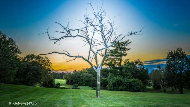 Placebo tree sculpture by Roxy Paine Forest Park Art Museum