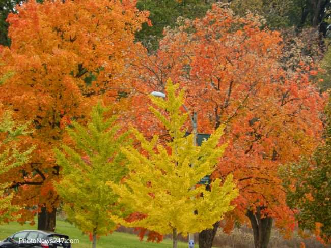 Trees turning fall at Forest Park Forever