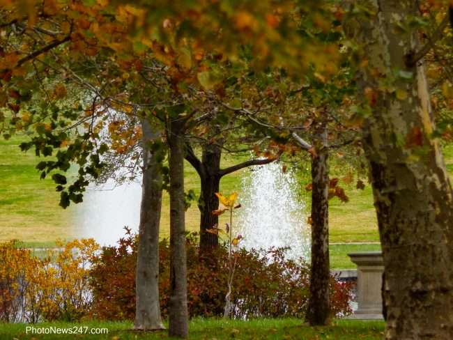 Water fountain viewed through the tress at Forest Park Forever