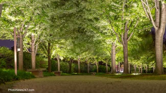 lighted sidwalk at Forest Park Art Museum